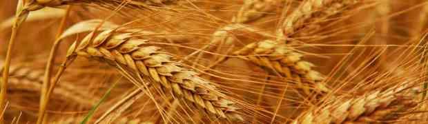 Irã e Brasil ampliam cooperação agrícola