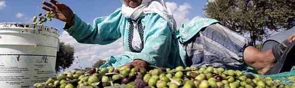 O território palestino ocupado: Um caso de lacuna, imposta, de recursos